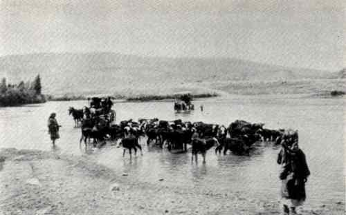 traversée du jourdain près de degania par le bétail 1920