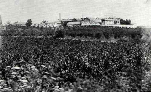 zikhron yaakov 1912 vignoblesjpg